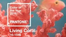 """Pantone del año 2019 """"Living Coral"""""""